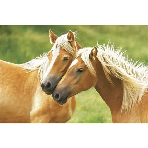Two horses poster - Posters buy now in the shop Close Up GmbH