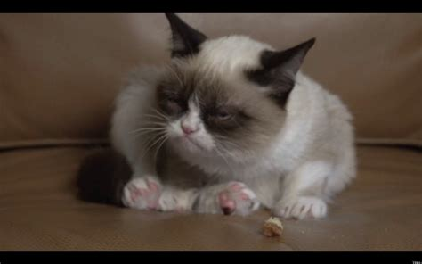 Tard The Grumpy Cat Speaks, And Not Surprisingly, It's