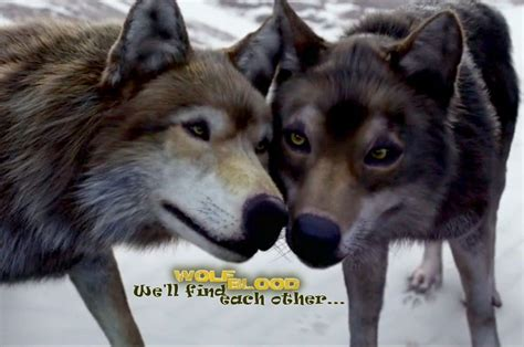 Wolfblood wolves, the end of season 3, Rhydian and Maddy