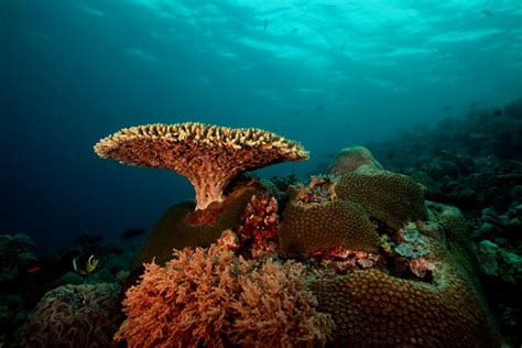 The 15 Most Beautiful Coral Reefs In The World