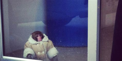 This sharp-dressed monkey at IKEA rules the Internet   The