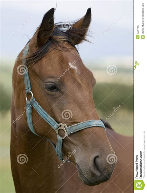 Horse's Head Royalty Free Stock Photography - Image: 10088217